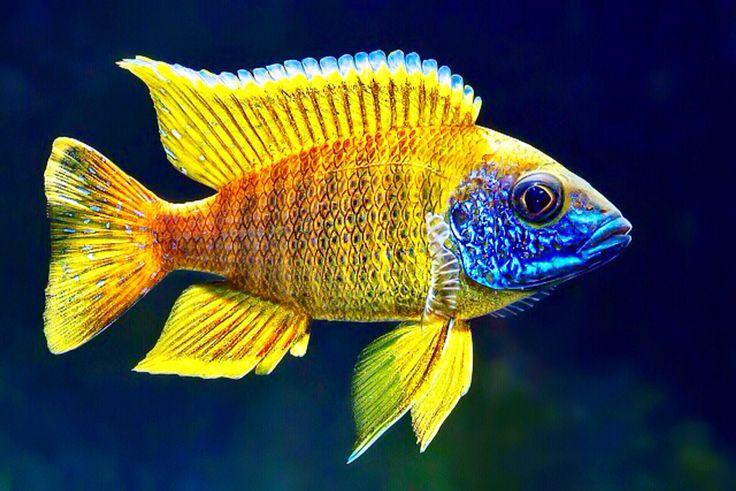 New arrivals for black friday aquatica aquarium gallery for Fish store reno
