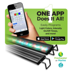 Reno WiFi LED - 1 App Does it All!